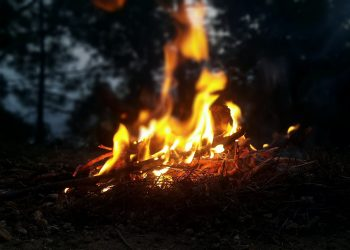 Darf man Feuer im Wald machen? (Tipps & welche Strafe?)