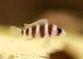 Heizung für Aquarium (Top 3) | Heizstab & Regelheizer kaufen