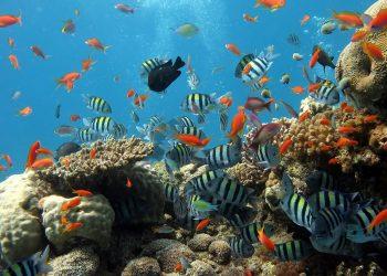 Heizstab für Aquarium – wie viel Liter? (50, 200 & 450 l)