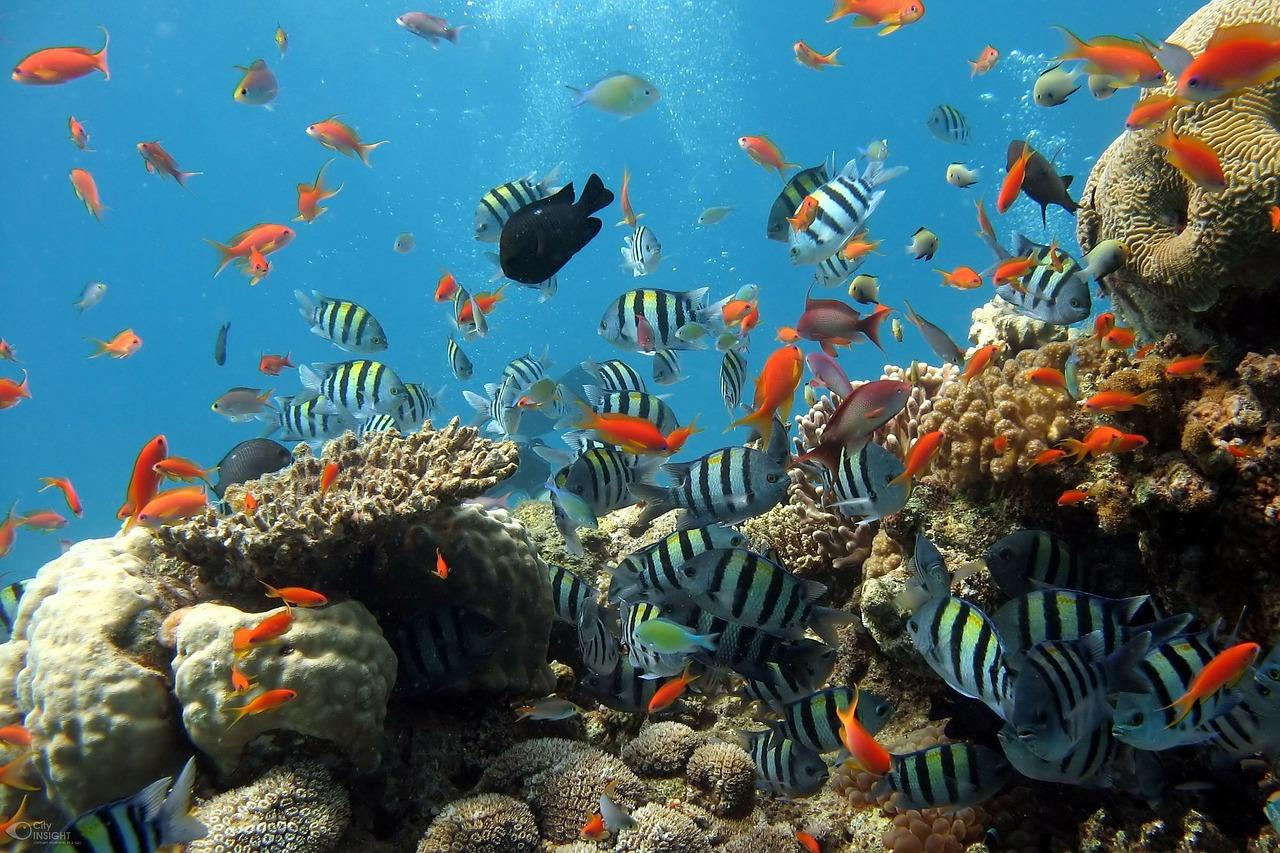 Aquarium Fische Unterwasserwelt Wasser