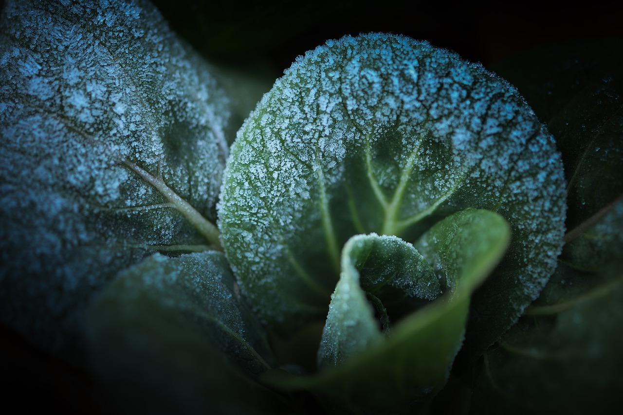 Frost Gemüse Gewächshaus Pflanzen