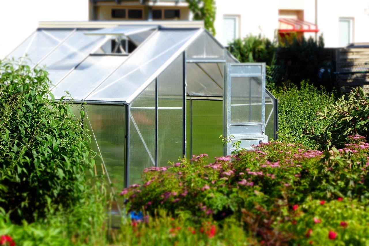 Gewächshaus Garten Pflanzen