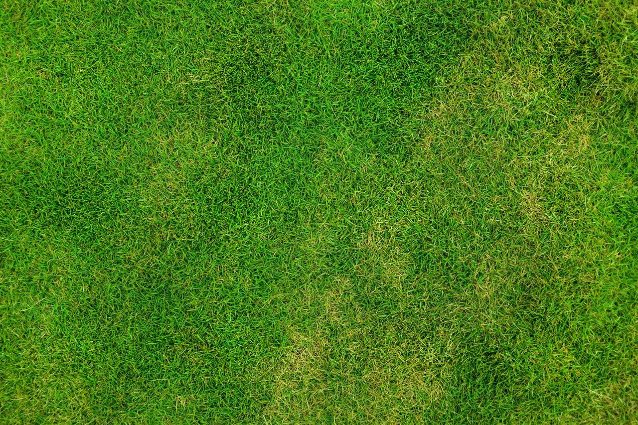 Gras Rasen Wiese Garten