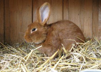 Heizung für Kaninchenstall im Winter | Kaninchen & Meerschweinchen