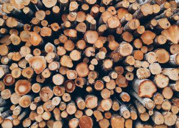 Holz für Feuerschale | Feuerstelle & Lagerfeuer Brennholz kaufen