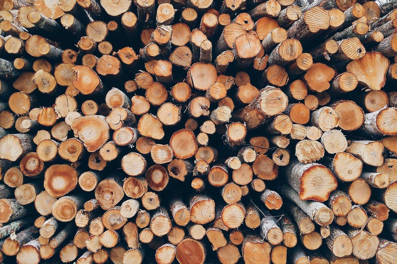 Holz Brennholz Äste