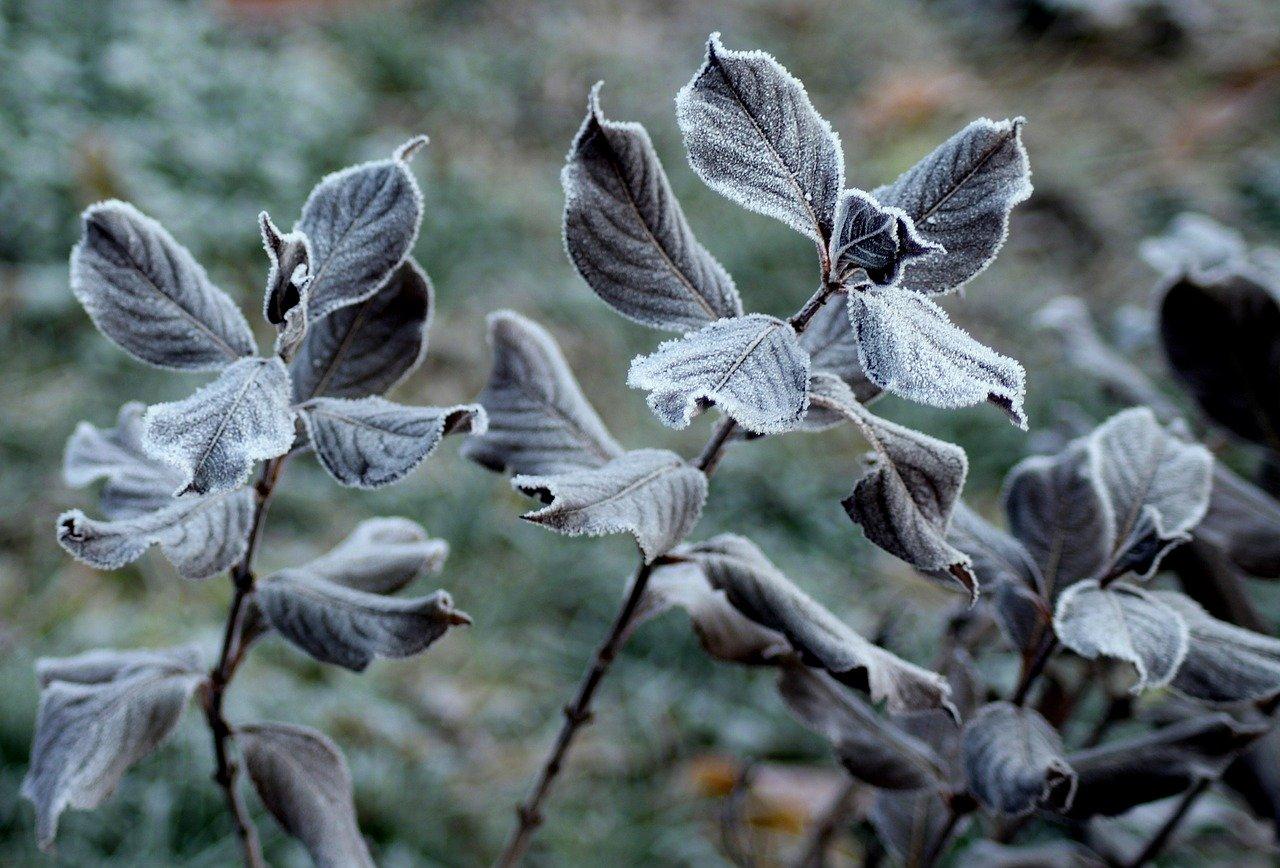 Raureif Frost Winter Kälte Pflanzen Garten