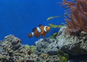 Kleiner Heizstab für Aquarium | Mini-Aquariumheizung & Regelheizer