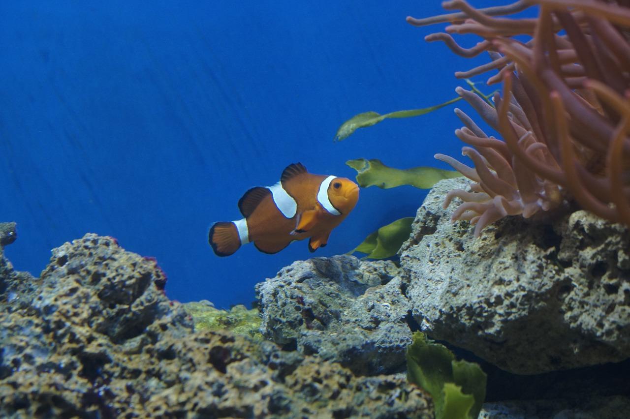 Aquarium Meerwasseraquarium Fische Nemo Clownfisch Unterwasserwelt