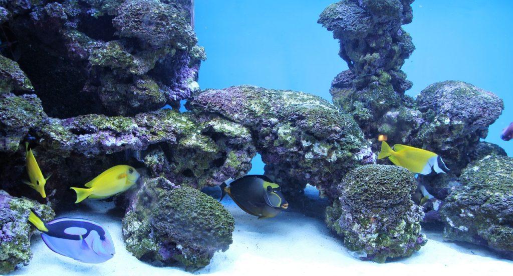 Aquarium Zierfische Wasser Unterwasserwelt