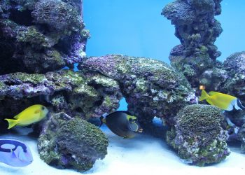 Heizstab mit Thermostat für Aquarium | Beste Aquariumheizung