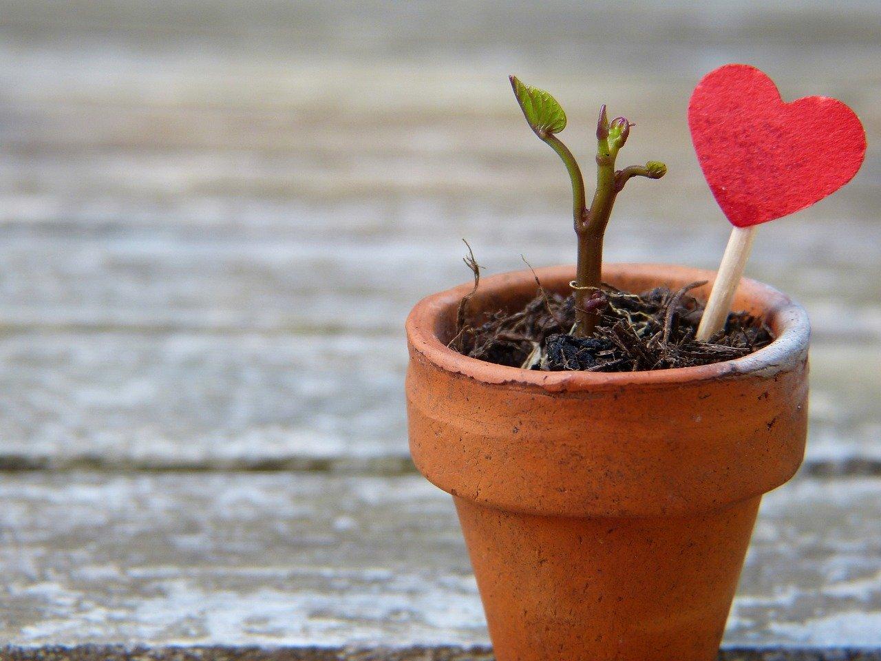 Blumentopf Pflanze Herz Terrakotta