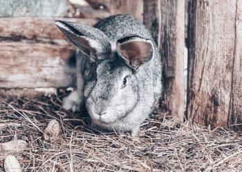 Stallheizung & Tierheizung (Top 3) | Stall heizen im Winter