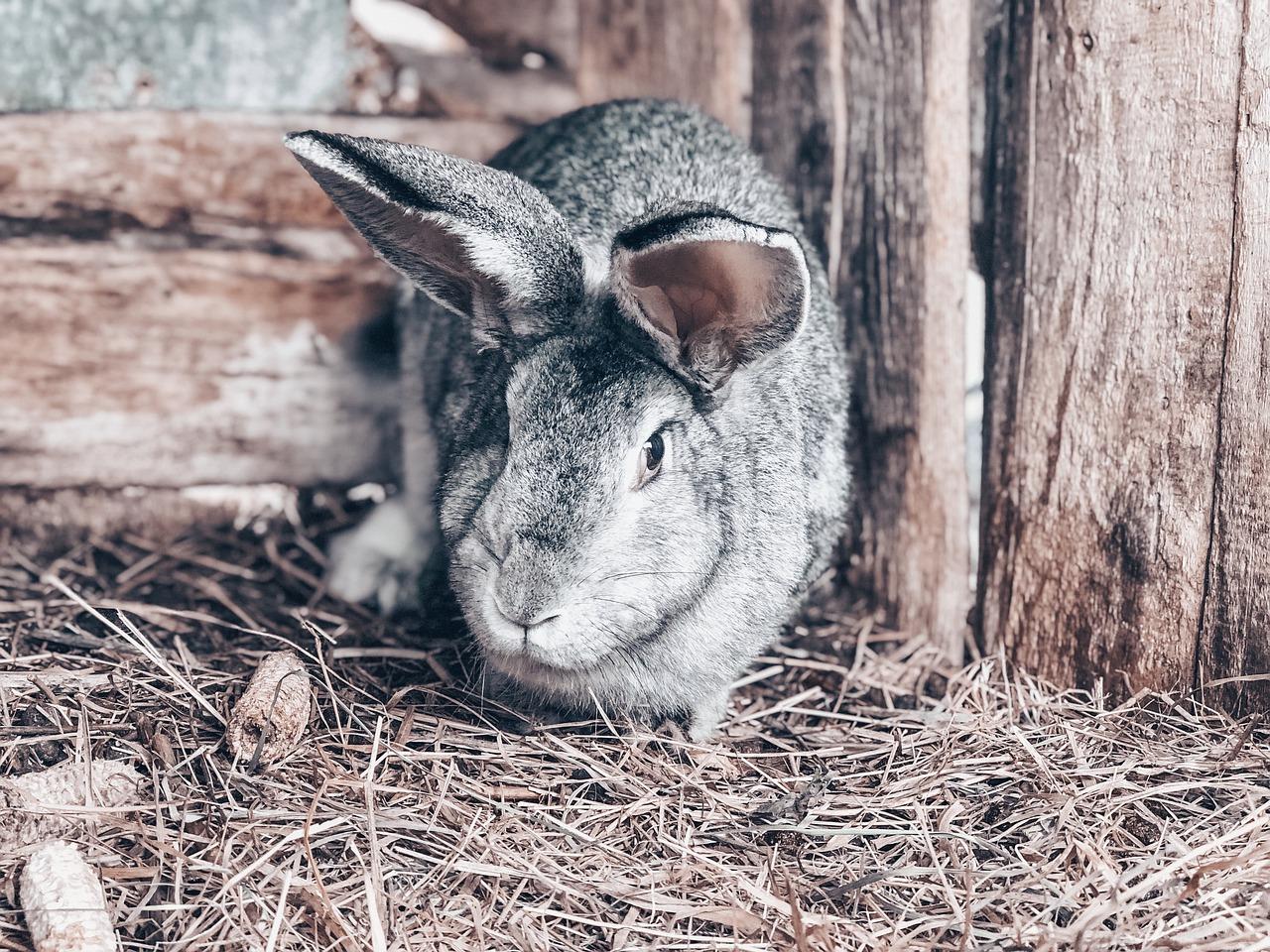 Hase Kaninchen Heu Stall Nager