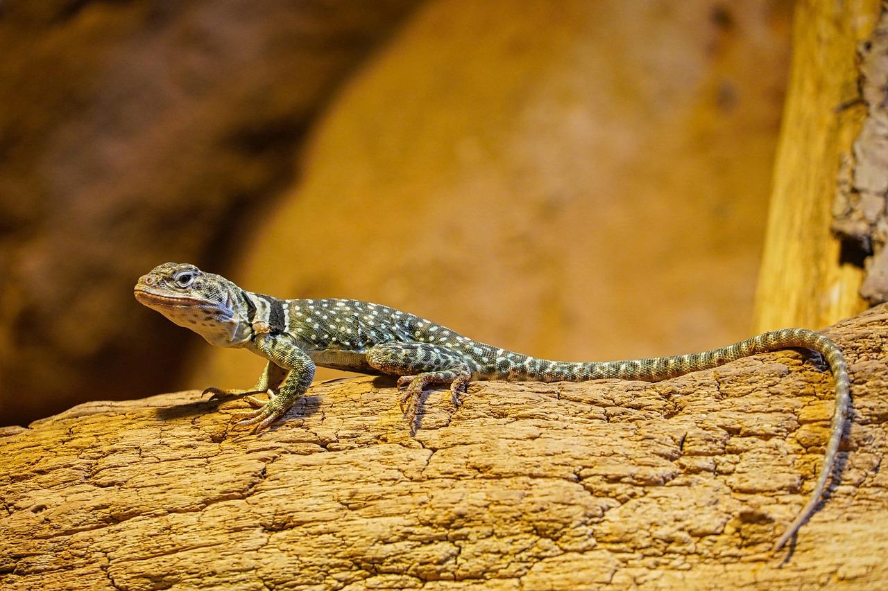 Terrarium Echse Lizard Gecko