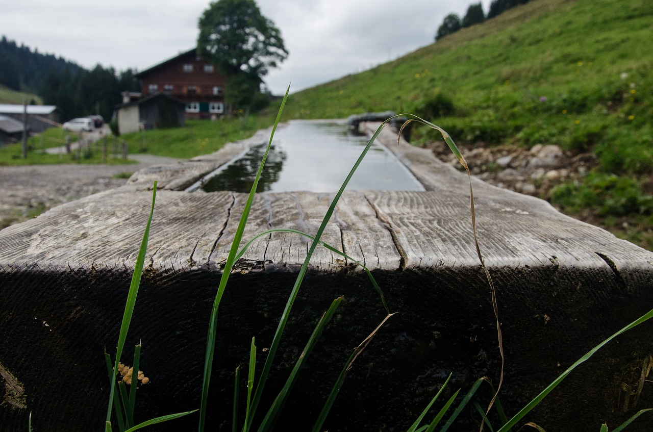 Trog Tränke Wasser Wassertrog