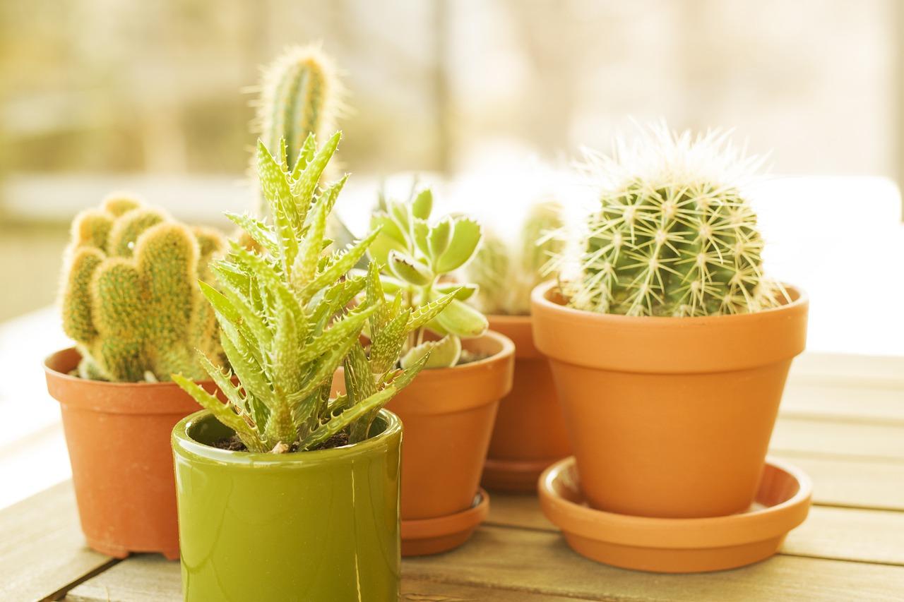 Blumentopf Tontopf Zimmerpflanzen Kakteen