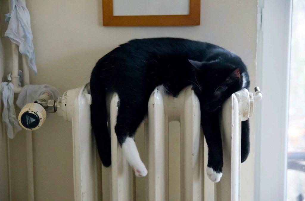 Heizkörper Wand Katze
