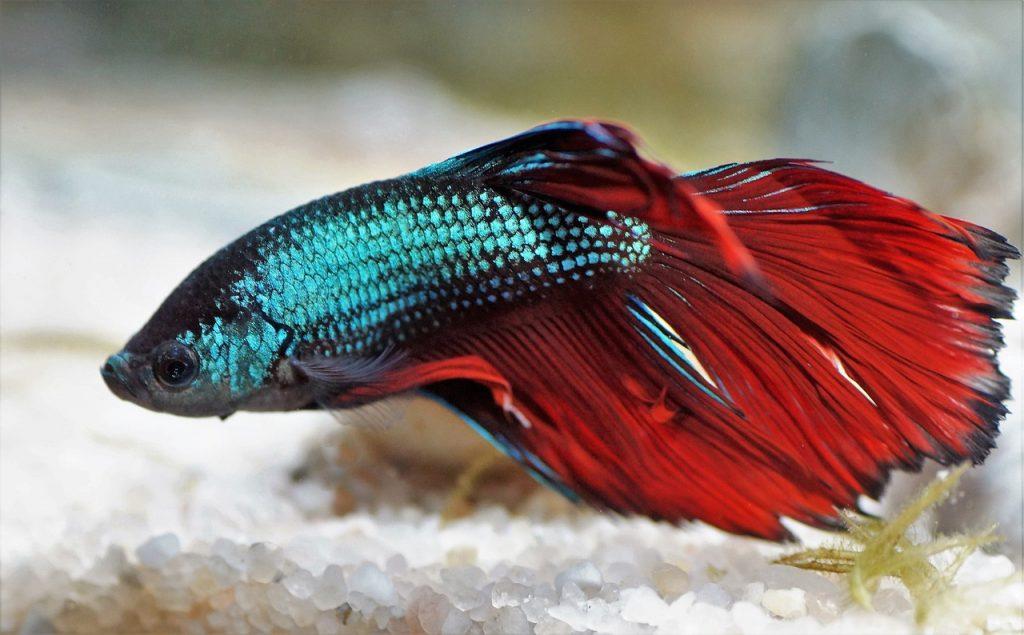 Fisch in Aquarium