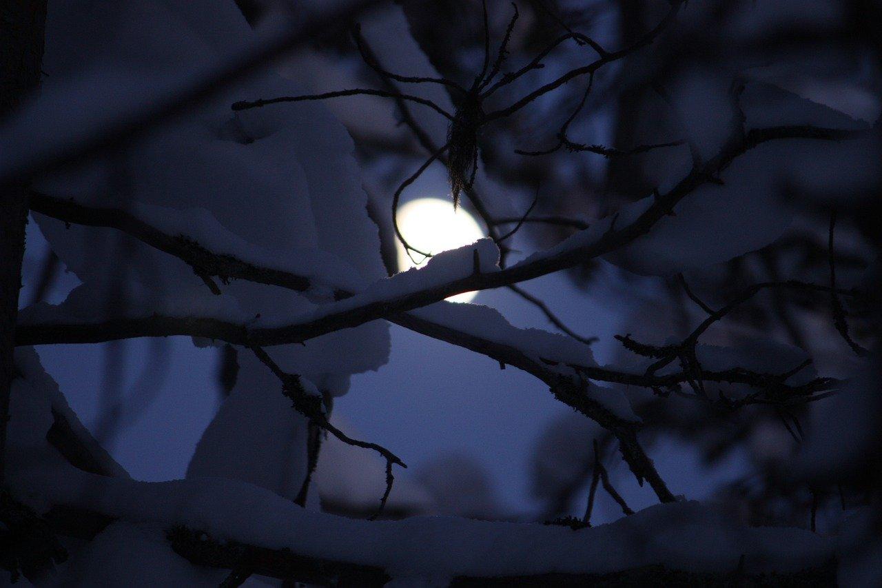 Nacht Mond Schnee auf Ästen
