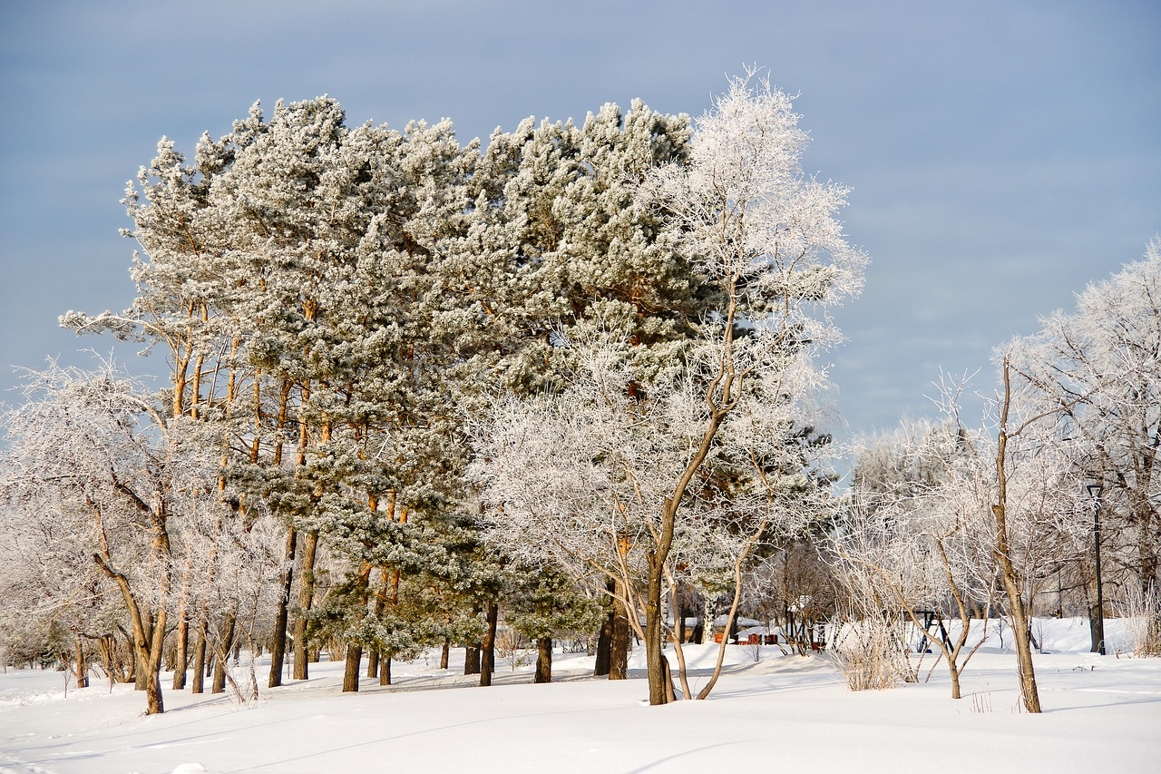 Winter kalt Schnee
