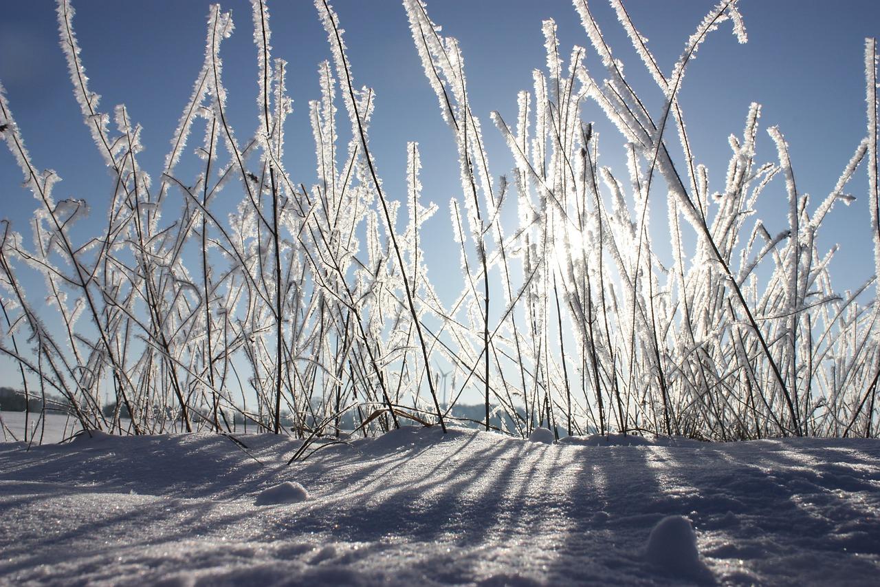 Winter Schnee Gras