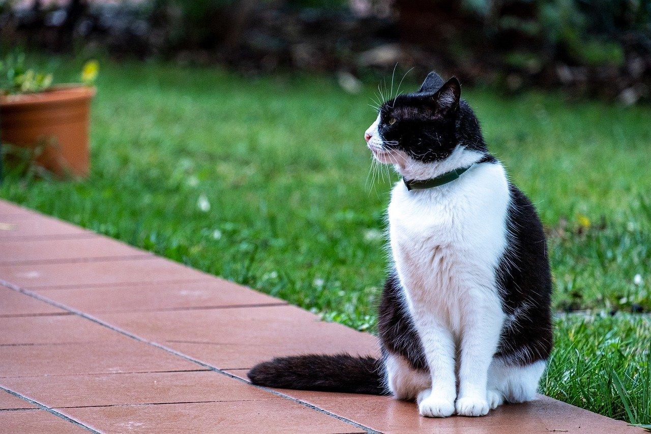 Katze Terrasse Garten
