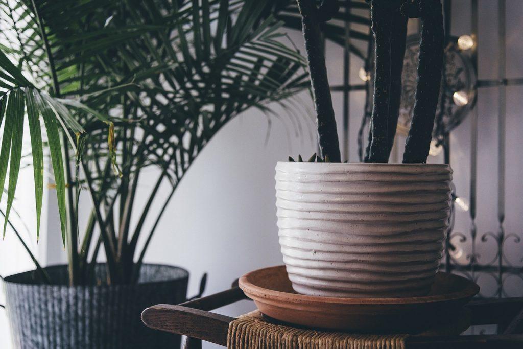 Zimmerpflanzen Pflanzen Topf Deko