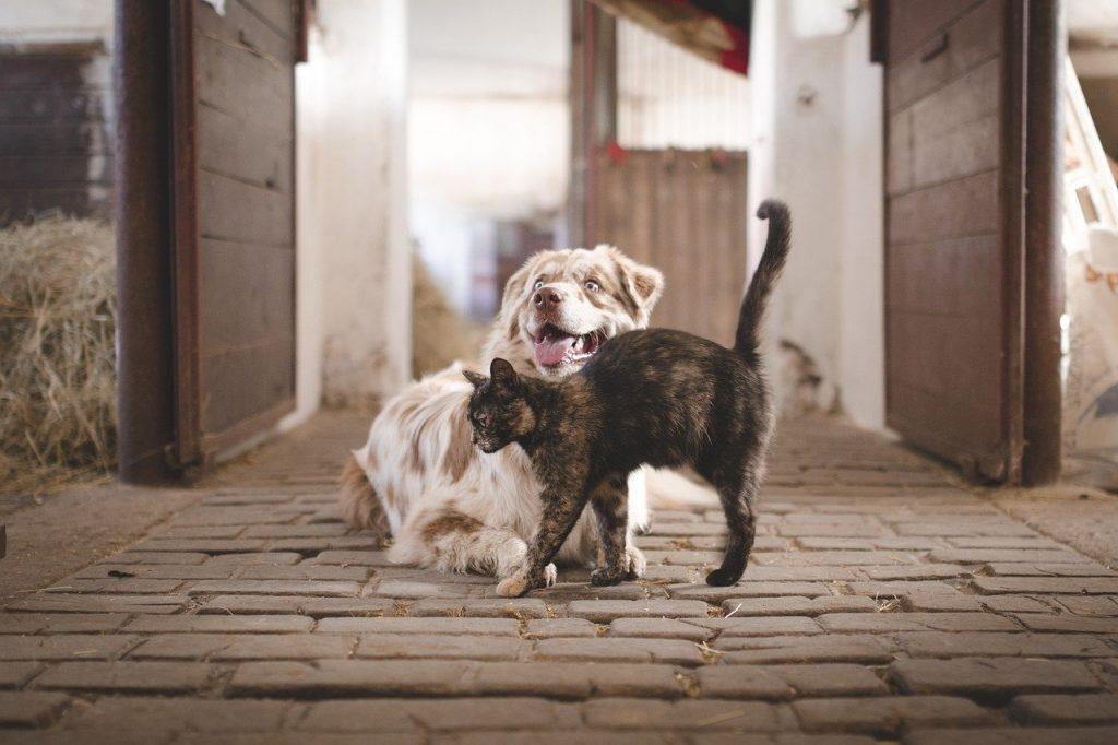 Hund Katze Haustier
